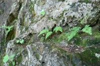 3. Ferns in rock seam.