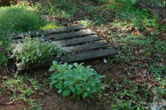 Pallet is great herb garden.