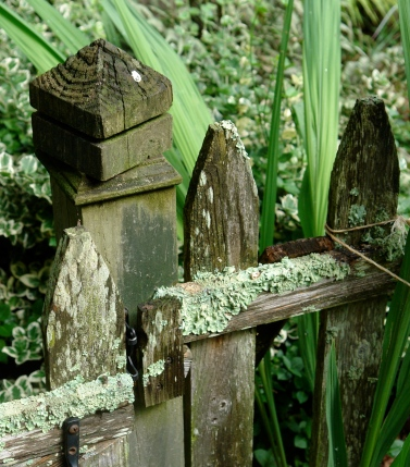 Lichen grows on the gate.