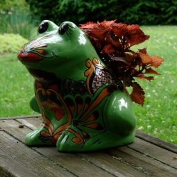 Coleus pairs with frog.