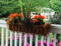 Orange begonias and pink phlox.
