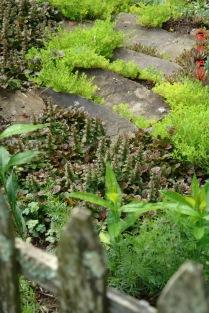 Ajuga and sedum border stone steps.