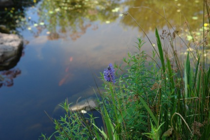 Nature imitates Monet in the Jane Andrews Memorial Stream Garden