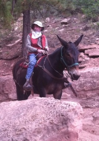 """Rooster"" the mule on Grand Canyon trail."