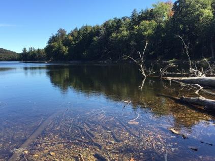 Moss Lake