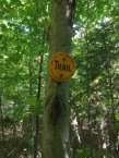 Pine-needled trail.