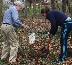 Sam convinced dad-dad to help plant a tree.