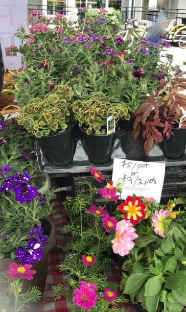 I wanted a purple petunia with white 'paint spatter' spots, but couldn't see if for looking.