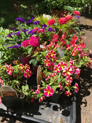 Five exuberant million bells and matching portulaca.