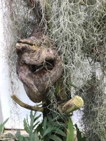 Mississippi swamp critter?