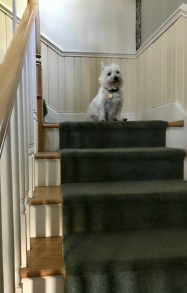 The stair-mistress.